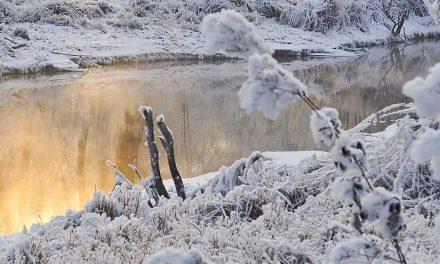 Pond Heaters for cold weather conditions