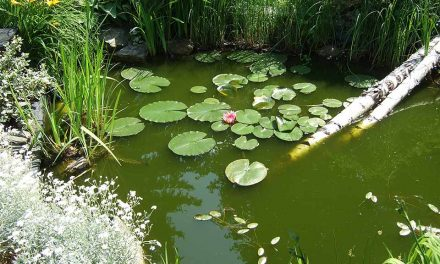 The best Fish Pond Plants