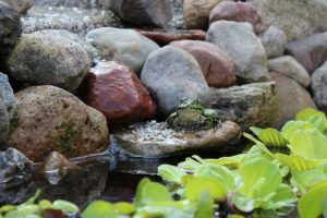 pond edging with rocks