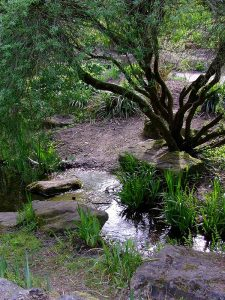 peacefully meandering garden stream